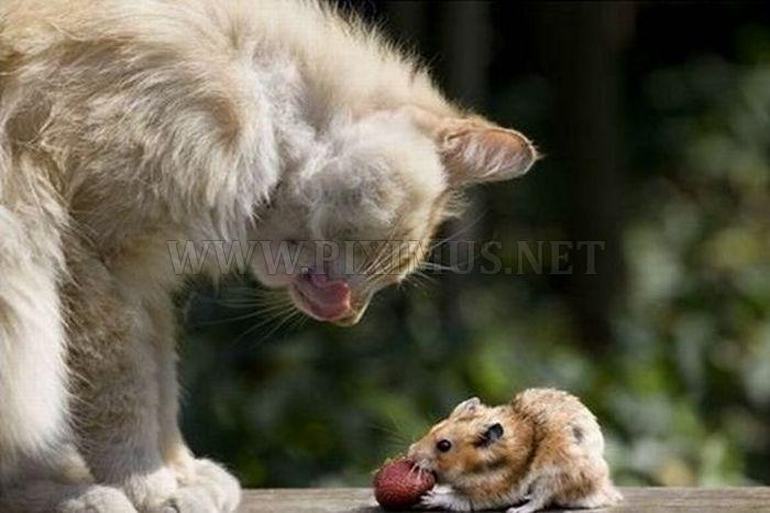 Sweet Couple - Cat and Mouse
