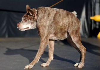 Meet The Dog That Won The World's Ugliest Dog Contest