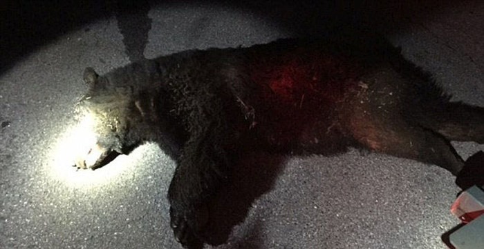 College Party Gets Crashed By Black Bear