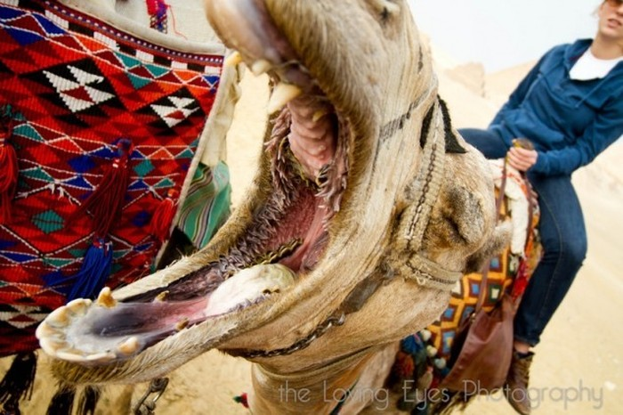 The Inside Of A Camel's Mouth Will Fuel Your Nightmares