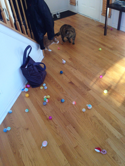 Hoarder Cats That Need A Serious Intervention