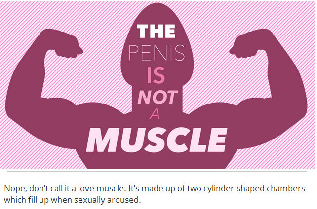 12 Things Every Person Needs To Know About Penises