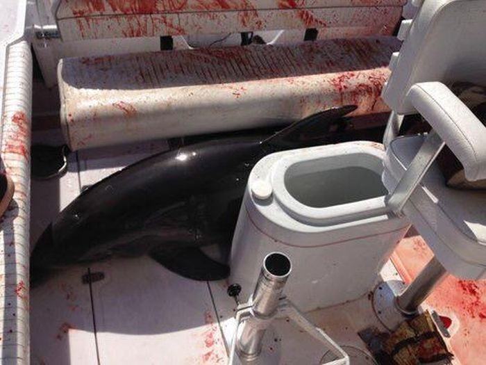 Dolphin Jumps Out Of The Water, Into A Boat And Breaks A Woman's Ankles