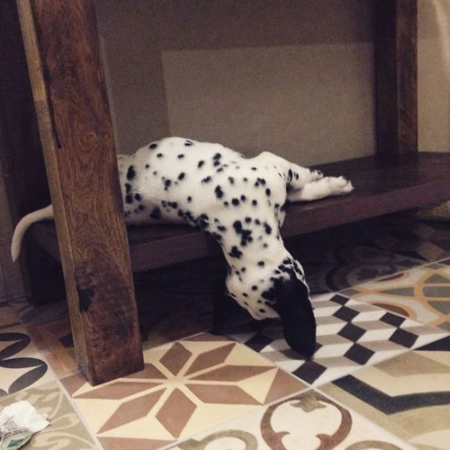 Proof That Puppies Can Sleep Absolutely Anywhere