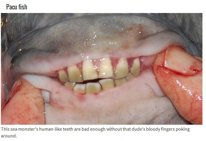 10 Animals With Mouths That Will Haunt Your Dreams