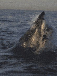 Terrifyingly Shark GIFs