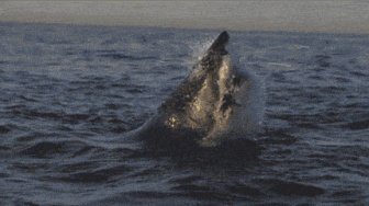 Terrifyingly Shark GIFs