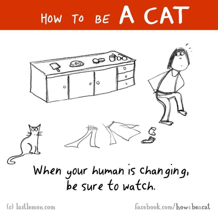 Everything You Need To Know About How To Be A Cat