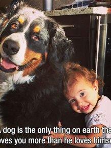 Dog - Man's Best Friend
