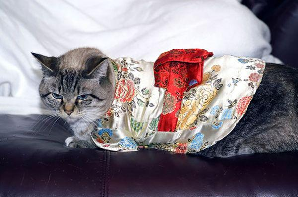 Cats in kimonos