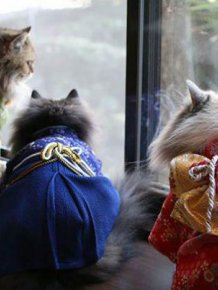 Cats in kimonos