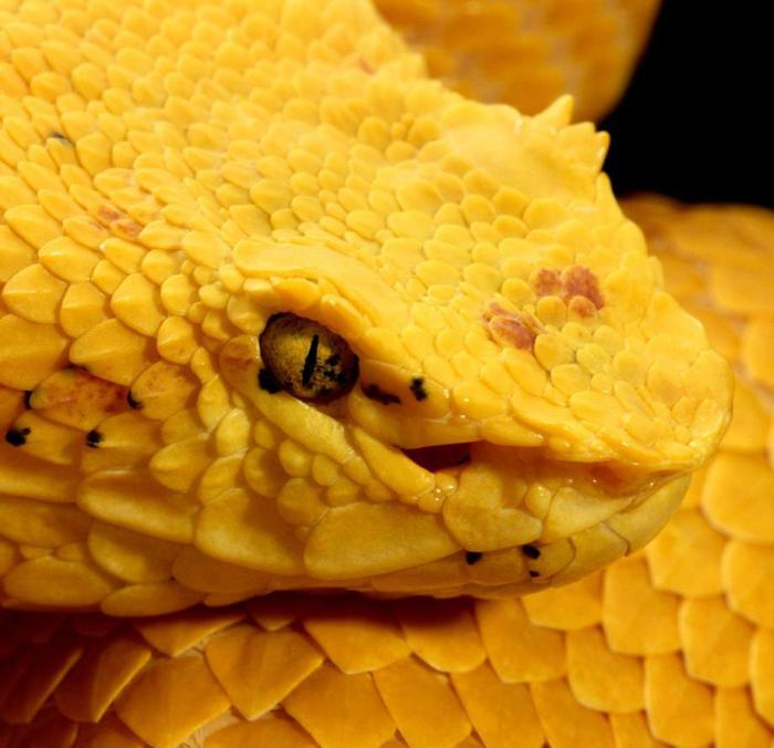 Vicious Animals You Definitely Want To Avoid