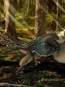 New Breed Of Raptor Discovered In China