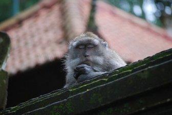 Meditating Monkeys