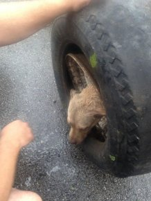 Firefighters Rescue Dog That Got Its Head Stuck In A Wheel