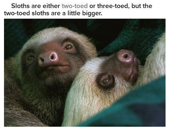 Fun And Interesting Facts About Sloths