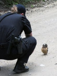 Rebellious Owl Gets Confronted By Police After Jaywalking