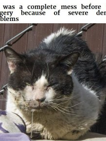 Generous Person Spends $1,000 To Change A Stray Cats Life