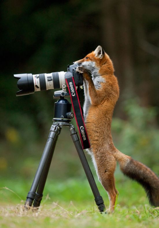 Animals That Wish They Could Be Photographers