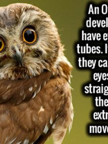 Random Facts To Help You Satisfy Your Curiousity