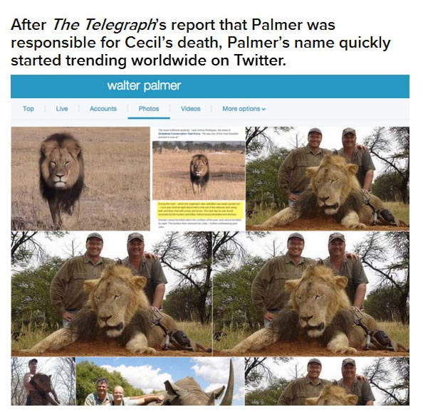 Dentist Gets His Social Media Pages Flooded After Killing Cecil The Lion