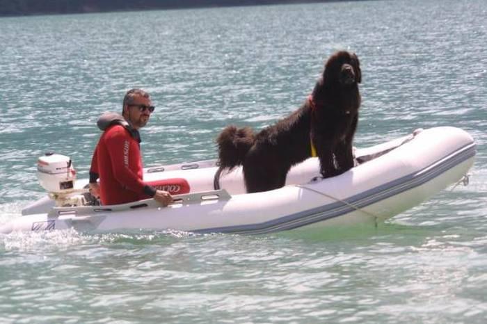 Rescue Dog Becomes A Member Of The Newfoundland Coast Guard Team