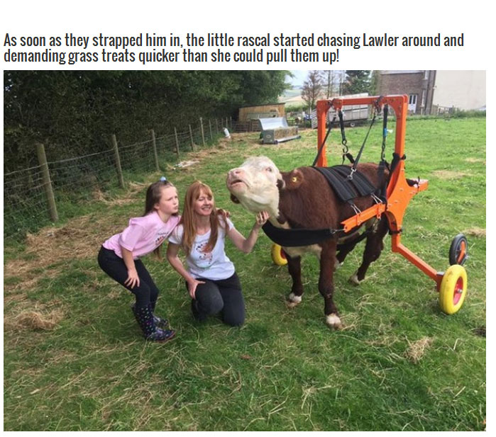 These Farmers Went Out Of Their Way To Save The Life Of A Cow