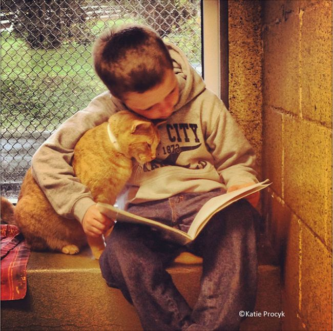 Kindhearted Woman Hangs Out At The Shelter And Reads Books To Lonely Dogs