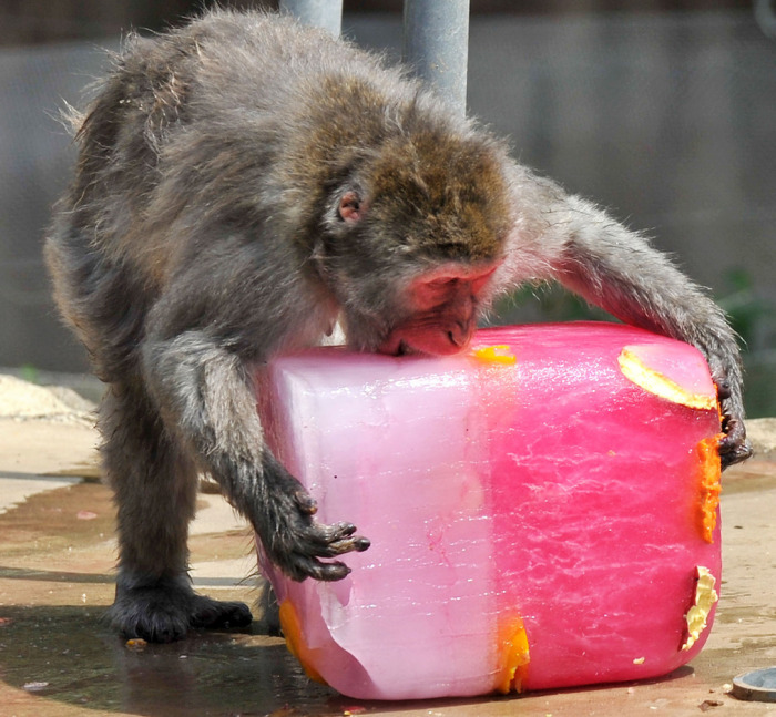 Animals Stay Cool In The Summer Heat By Eating Icy Treats
