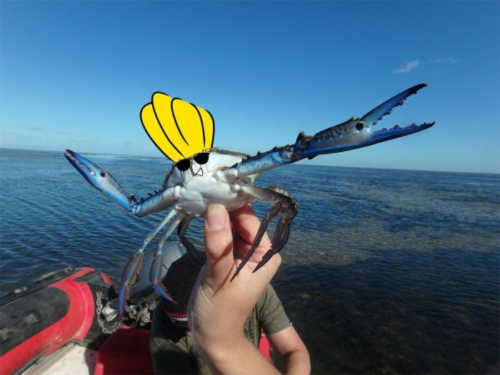 This Photoshopped Crab Is The Newest Internet Sensation