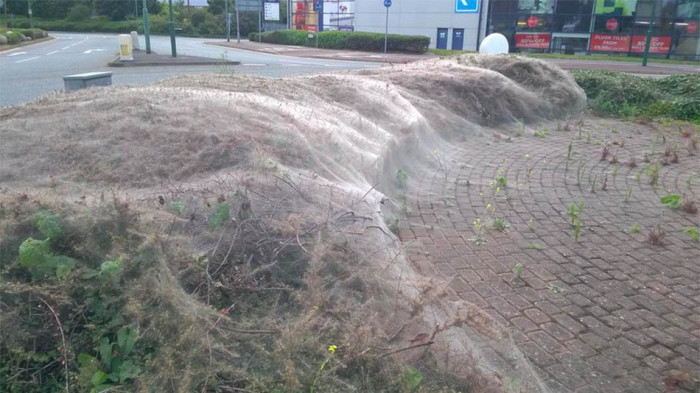 Giant Silk Web In London Looks Like Something Out Of A Horror Movie