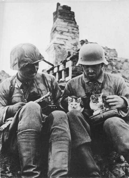 Soldiers Spend A Little Time Cuddling With Cats