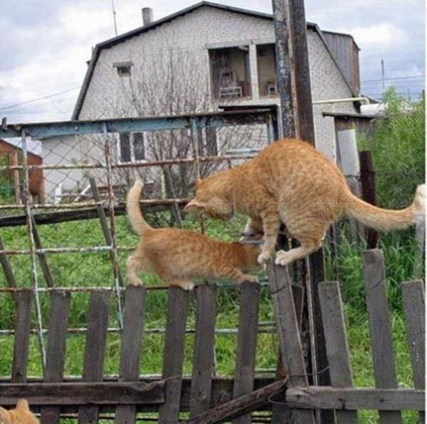Two Cats, One Fence
