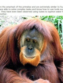 You'll Be Surprised By How Smart These Animals Actually Are