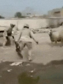 15 Gifs That Show Special Forces In Action