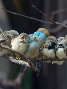 Birds Cuddle Up to Stay Warm