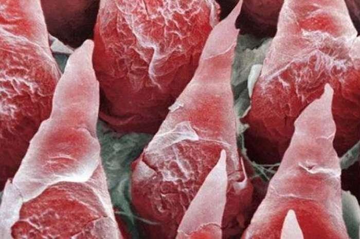 Microscopic Photos Of Human Body Parts