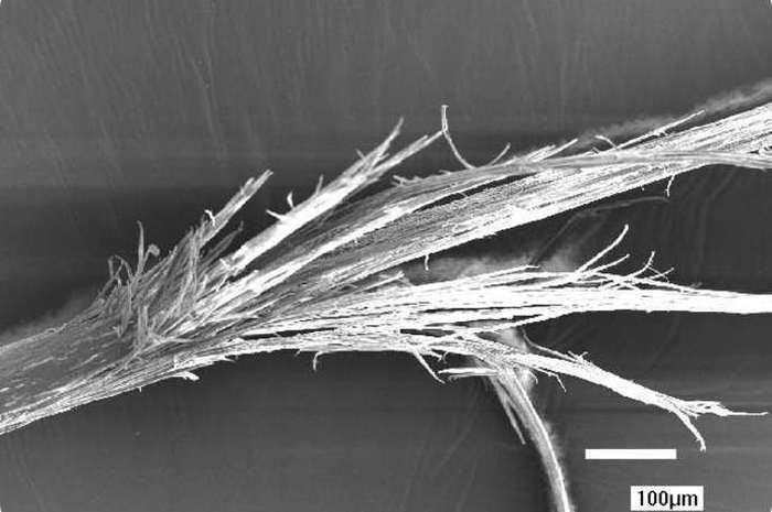 Microscopic Photos Of Human Body Parts