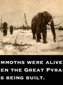 Strange Facts That Are True
