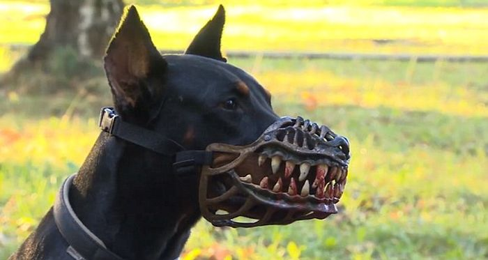 Whats Really In Your Hot Dog further Belgian Malinois As Police Dogs likewise Scary Muzzle That Turns Any Dog Into A Beast in addition Watch moreover John O'Hurley. on animal planet dogs