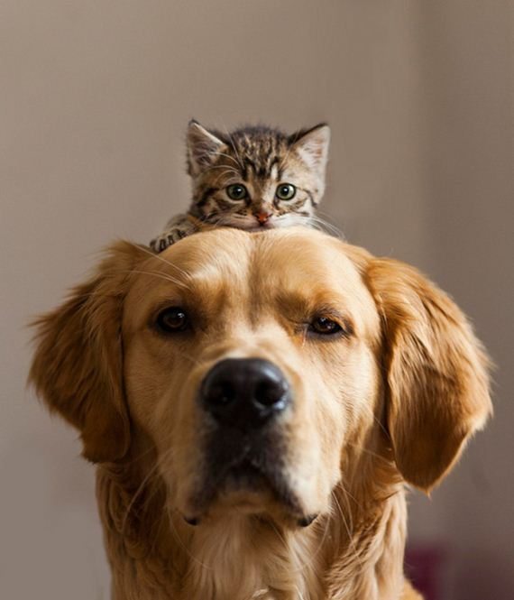 Dogs and Cats, part 2
