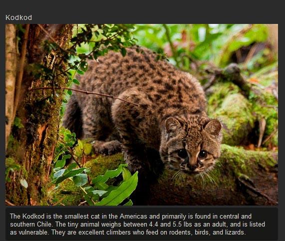 Unusual Cat Species