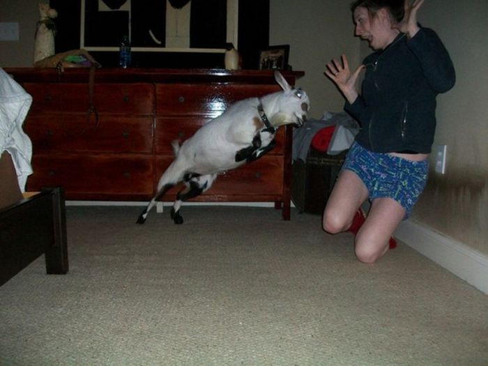 Perfectly Timed Photos, part 4
