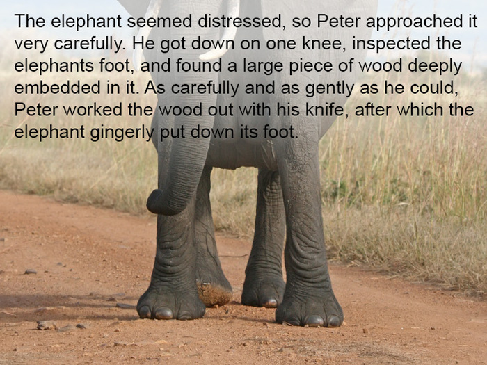 This Story Is Proof That Elephants Never Forget