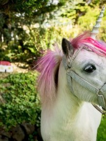Meet The Couple That Shares Their House With A Unicorn
