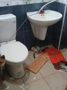 Locking A Dog Up In A Bathroom Is A Horrible Idea