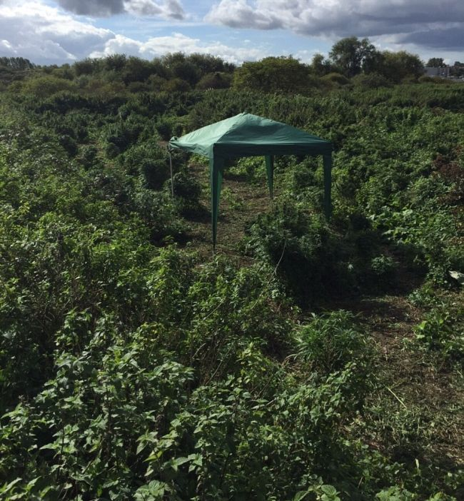 Police Find A Forest Of Cannabis Plants Growing In London