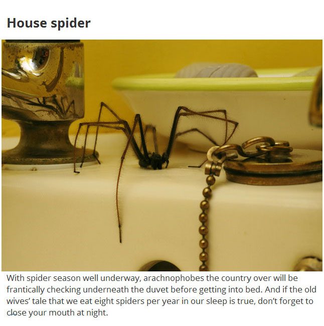 These 12 Disgusting Creatures Could Be Living In Your Home