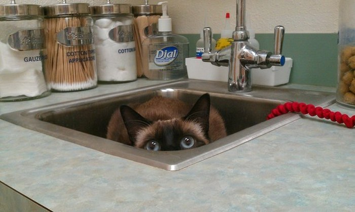 Cats Try Their Best To Hide From The Vet
