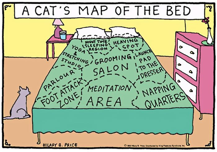 Funny Comics Perfectly Describe What It's Like To Own A Cat